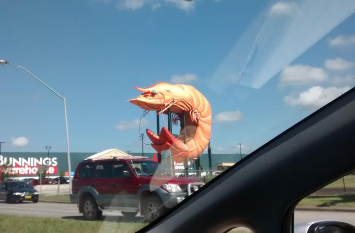 Photo of a giant prawn